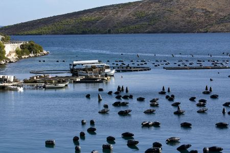 Mussels fishing bay full of floating container