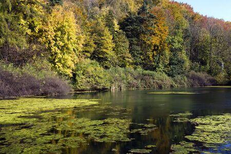 Plenty of colors, sunny autumn at the lake Stock Photo