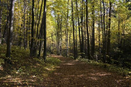 Autumn way in the wild beech forest Stock Photo
