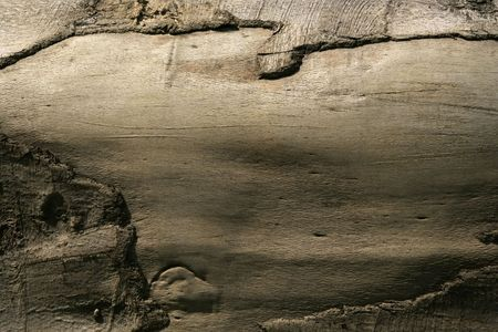 Closeup of old, wooden log with patterns painted by light and nature