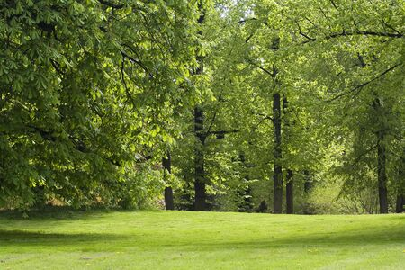 Kingdom of verdure at the sunny, quiet park Stock Photo