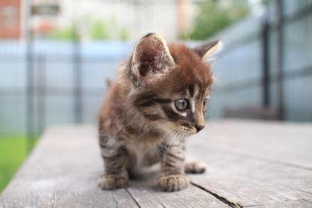 Gatito en la mesa Foto de archivo