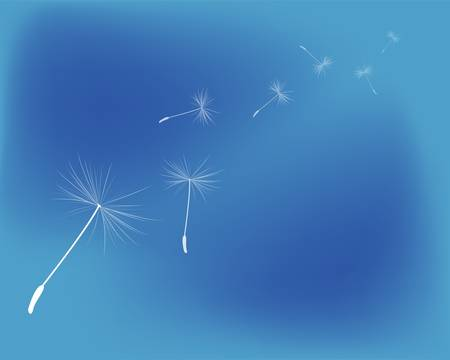 background dandelion fluff Illustration