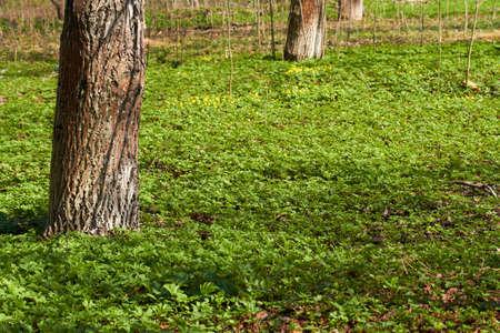 Primavera prado de flores en el bosque Foto de archivo