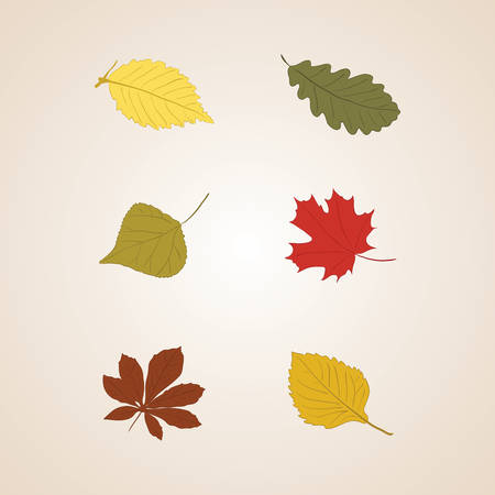 Autumn leaves set vector background, icon Vector