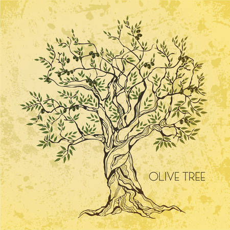tree illustration: Olive tree on vintage paper