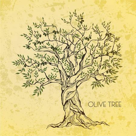 arbol raices: Olivo en papel de época