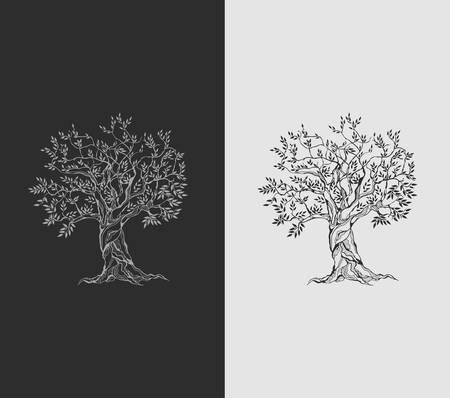 foglie ulivo: Olivo su carta vintage