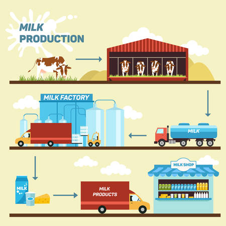 dairy cows: illustration of stages of production and processing of milk from a dairy farm to table.