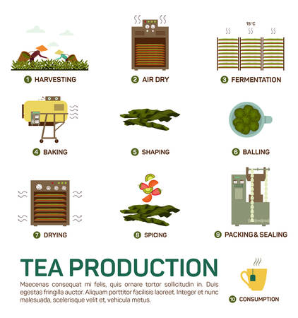 Seamless illustration of tea production, air dry, fermentation, baking and shaping, balling, drying, spicing and packing and sealing, consumption