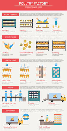 food industry: Agriculture, animal husbandry infographics Production of chicken meat The incubation period breeding chickens, vaccination, growth and feeding of poultry Slaughtering and delivery of meat to the store