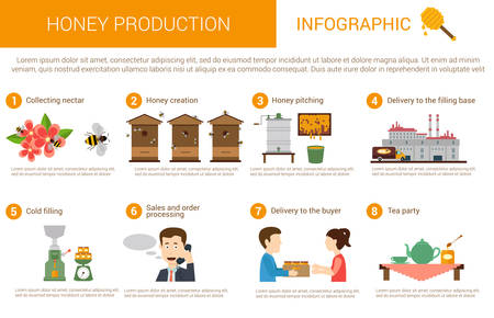 Honey production process stages or steps in infographic form. Bees or honey wasps collecting nectar from flowers, beekeeper pitching it and deliver to filling base for caramelizing by cold, order and sale stage before drinking tea Stock Illustratie