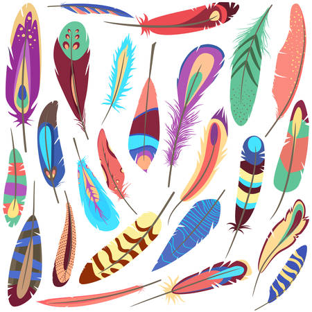 shaft: Set or collection of bird or flyer fluffy and colorful ornamental or decorative feather of american parrot or peacock that consists of vane and rachis, barb and afterfeather, hollow shaft and calamus