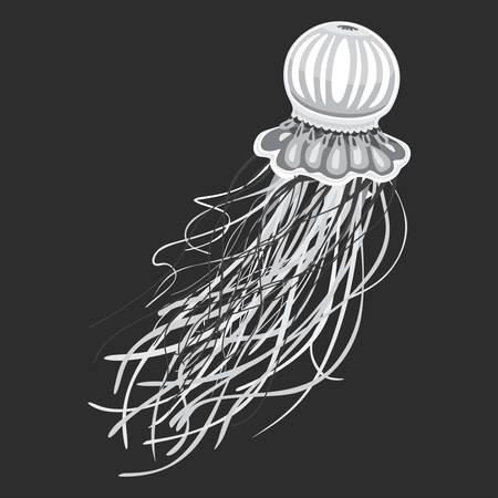 to pulsate: Spineless stripping blubber or jellies, medusa or jellyfish with pulsating bell and stinging tentacles. Wild predator non-polyp animal, hydrozoa or scyphozoa. May be used for tattoo or mascot theme