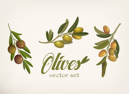 blacks: Set of green and yellow olive branches with leaves and berries with blacks. Raw vegetarian food and cosmetic or lubrication mediterranean ingredient. Can be used for vegetable and nature,organic theme