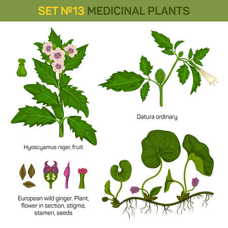 stigma: Hyoscyamus niger and european wild ginger or snakeroot, broad-level asarum canadense, datura or devils trumpets, moonflower stems and flowers, bush. May be used for medicinal or herbal, nature theme