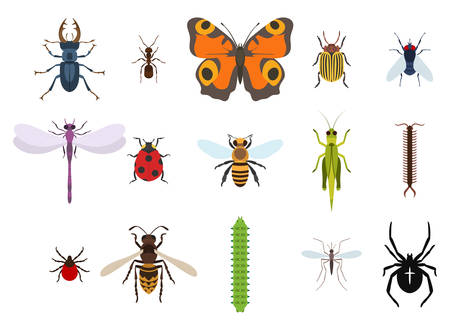 grig: Insects and bugs, pests and midge set of icons from top view. Mosquito or gnat, bee or honeybee, caterpillar or worm, moth or butterfly, dragonfly and crest spider, grasshopper and wasp, ladybug and fly, stag beetle and ant, colorado beetle Illustration
