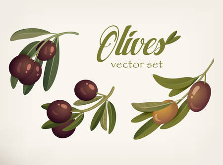 bleak: Yellow and ripe berries of olives with bleaks.