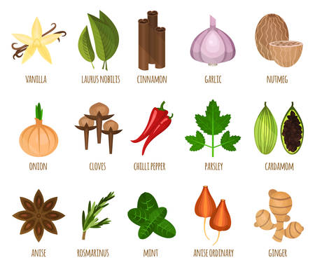 nutmeg: Herb seasoning and spice leaf food. Vanila and laurus nobilis, nutmeg and cinnamon, garlic and onion, chilli pepper and parsley, cardamom and ordinary anise. Cooking icons and restaurant or shop theme Illustration