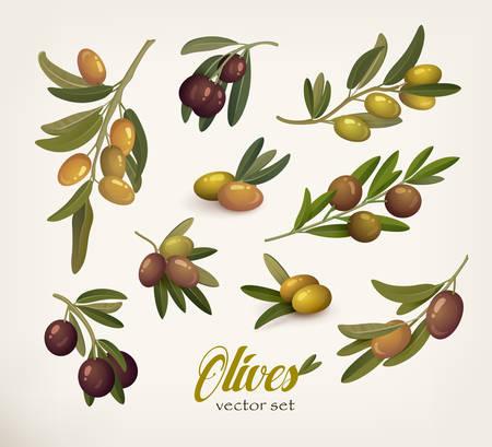 bleak: Set of green and black olive branches with twig. Bleak on olive berries with stem. May be used for olive oil bottle sticker or vegetarian olive food, botany book olive vector illustration
