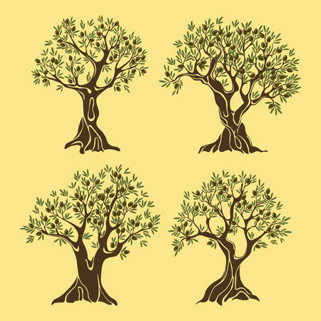 Set of greek olive oil trees in vintage style. Nature plant fruit tree with berries and crown foliage, branches. For bottle label or sticker, grove banner, vegetarian food emblem, agriculture theme
