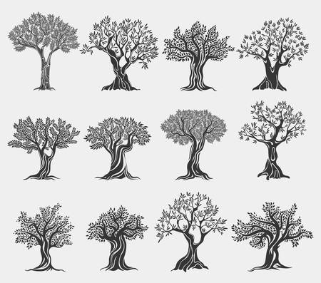 Olive oil trees logo isolated, agriculture icons Vettoriali