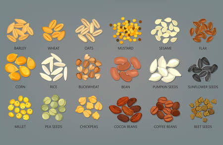 Food seeds and grains, beans of coffee and cocoa Ilustração