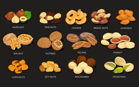 Set of grains and beans of food nuts Vetores