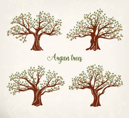 Set of argania or argan fruit trees with leaves