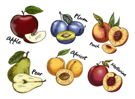Sketches of apple and pear, plum, apricot fruits Ilustracja