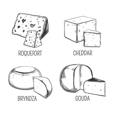 Bryndza and roquefort, cheddar and gouda cheese Illustration