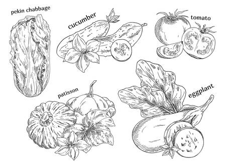 Food vegetables isolated sketches Çizim