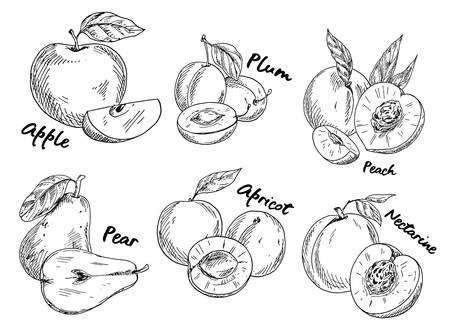 Schets van appel en pruim, peer en abrikoos