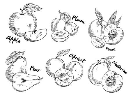 Sketch of apple and plum, pear and apricot Imagens - 90471221