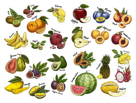 Sketches of fruits.