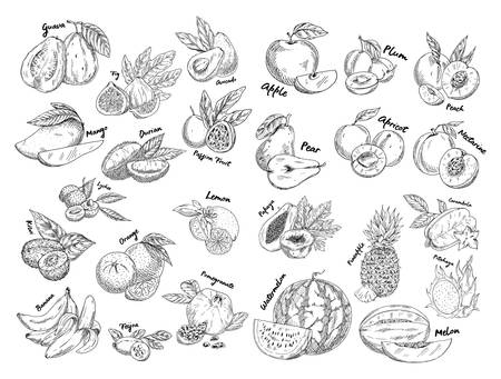 Set of isolated sketches of exotic, tropical fruit. Illustration