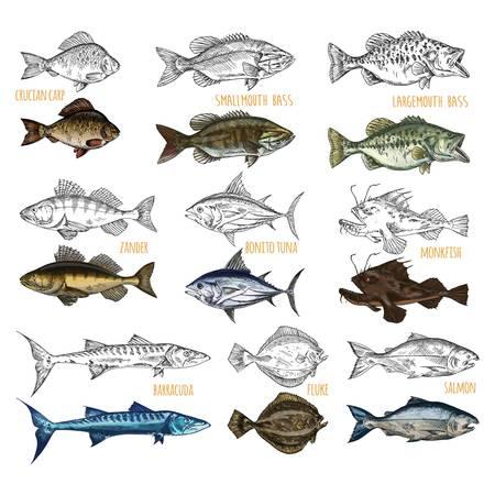 Vue latérale des croquis de poissons isolés Vecteurs