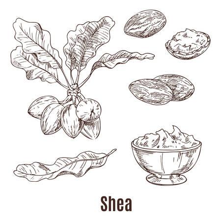 Croquis de noix de karité et de beurre dans un bol ou une tasse