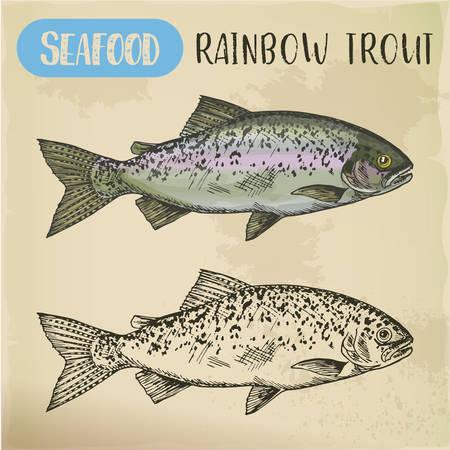 Regenbogenforellenskizze oder Küstenrotbandfisch Vektorgrafik