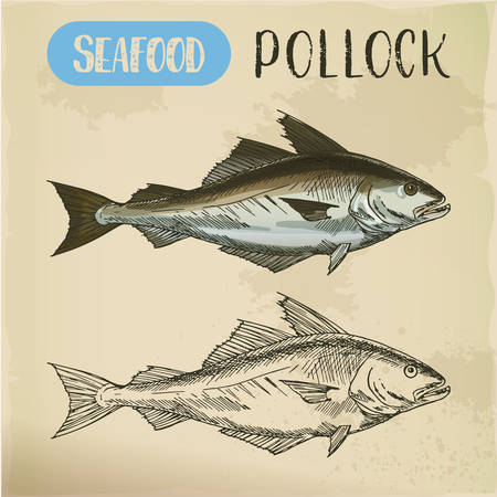 Pollock fish side view. Vector sketch Illustration