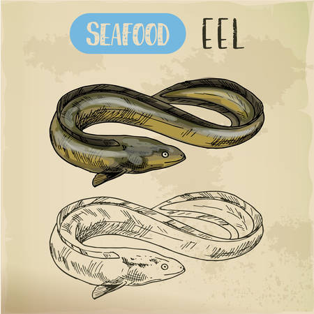 Spiny conger or electric, snake or mud eel sketch Vectores