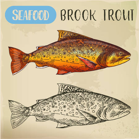Sketch of brook trout or squaretail. Seafood, fish Imagens - 101233373
