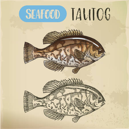 Sketch of USS tautog, blackfish. Seafood signboard Vettoriali