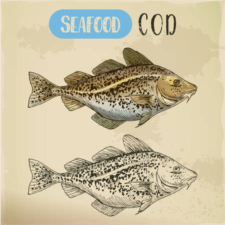Sketch of atlantic or pacific cod, fish or seafood Illustration