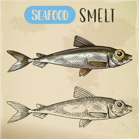 Smelt or freshwater fish side view sketch Stock Photo