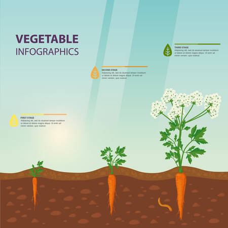 Template for agriculture or botany, biology sign about plant growth. Vegetarian or healthy food, vegan nutrition and vitamin, harvest and nature theme