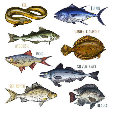 Signboards with fish. Trophy signs with eel and haddock, winter flounder and silver hake, sea and common roach, tilapia. Ocean and underwater wildlife, fishing and nautical, marine and catch theme