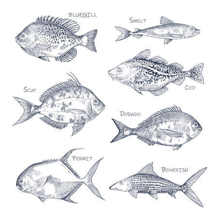 Croquis de fruits de mer ou ensemble de poissons isolés dessinés à la main. Crapet et éperlan, dorado ou mahi-mahi, thon rouge et cabillaud, permis et bonefish. Vue latérale sur un animal nautique ou sous-marin. Pêche, thème du menu