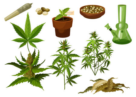 Set of isolated marijuana leaf and hemp seeds, cannabis buds or medicine weed foliage. Sativa and indica, bong and rolled joint, cigarette and pipe, pot or tobacco. Drug and plant, smoking and herbal