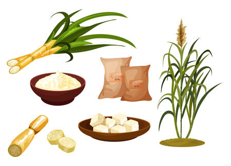 Sugar cane isolated icons. Set of sugar cube on plate, plant and paper bag. Pouch or packet with sweet food. Raw vector sugarcane. Agriculture and organic ingredient, cultivation and harvest, crop Foto de archivo - 138098994